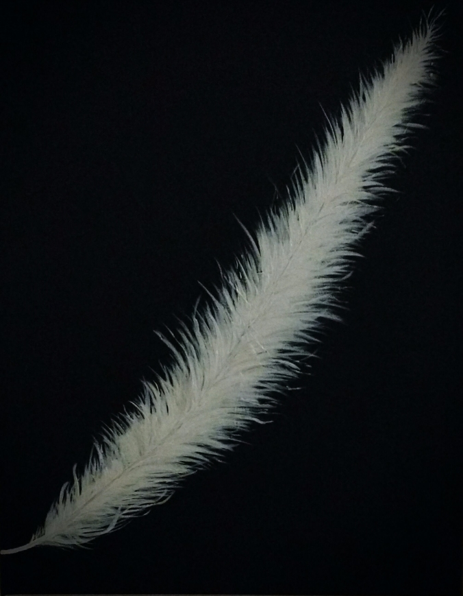 Feather by Justine Leys.jpg
